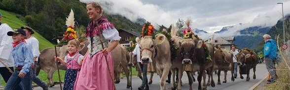 Colourfully garlanded cows walking in a row, led by people in traditional costumes.