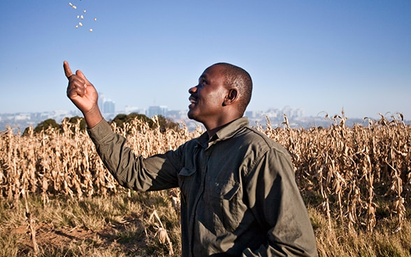 A man throws a handful of seeds up in the air. He is standing in front of a field of tall, brown stalks. There is the outline of a city on the horizon.