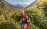 A young woman carrying a sheaf of fresh grass on her back.