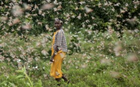 Donation of CHF 1 million to tackle locusts in East Africa