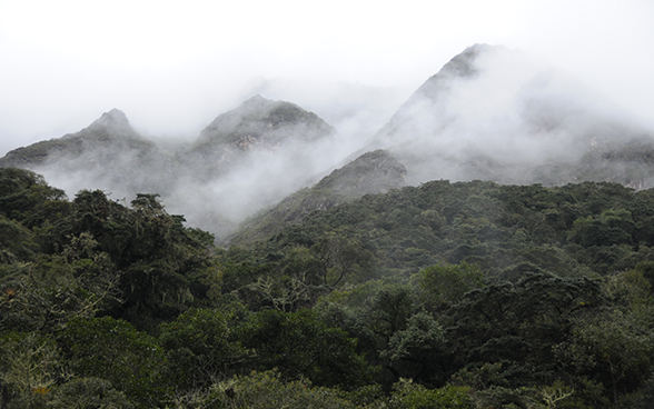 Part of the Andean forest covered in mist.
