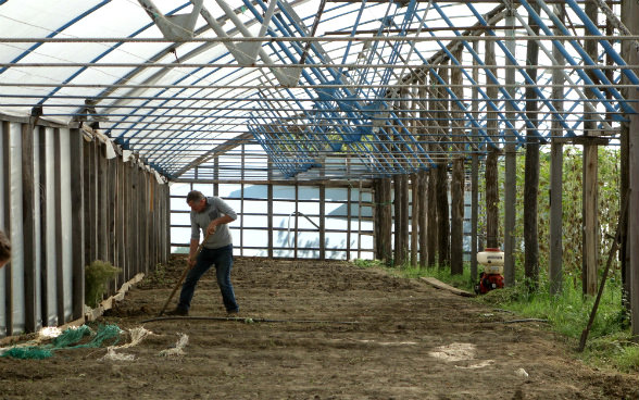 The photo shows Medea's father turning over soil in the family greenhouse, which was expanded recently.