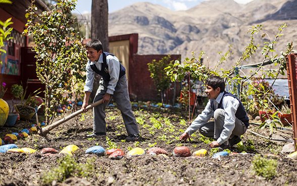 Two boys work on a vegetable plot.