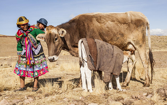 A woman with a child on her back stands with a cow and her calf.